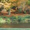Temple Newsam Lake