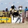 The Bungendore Rodeo 2013 - 010