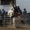 The Bungendore Rodeo 2013 - 003