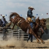 The Bungendore Rodeo 2013 - 001