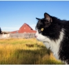 Romeo the ranch cat