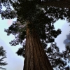 Sequoias 2013 by Personal Photography