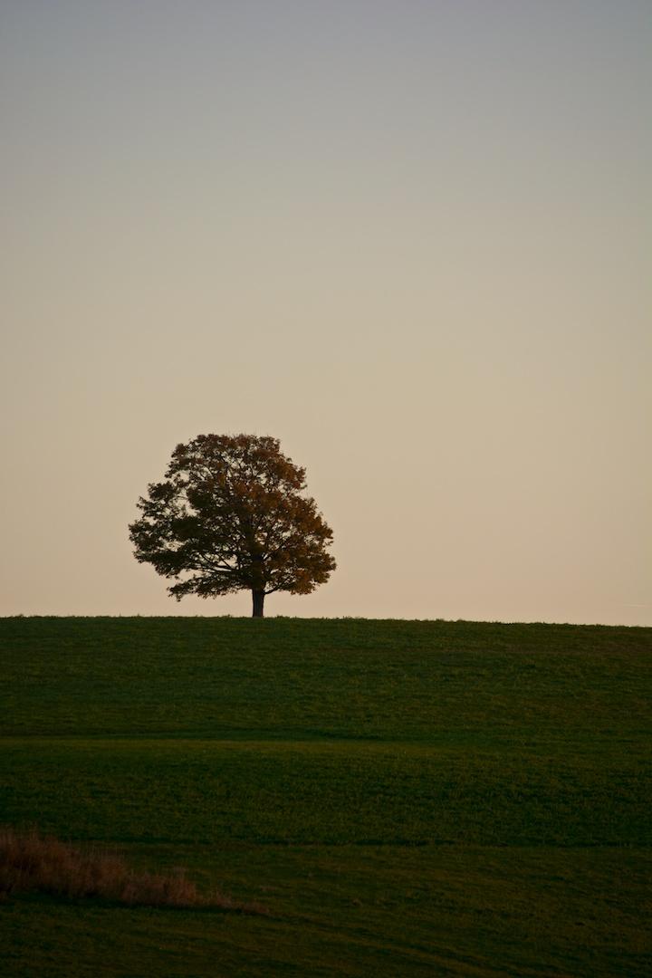 A Lone Tree near Alma, NB, Canada