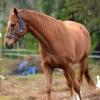 horses 017 2 (819x1024)