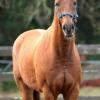 horses 022 2 (683x1024)