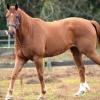horses 020 2 (1024x683)