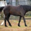 horses 003 2 (1024x683)