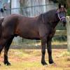 horses 004 2 (1024x683)