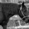 horses 001 2 (1024x683)