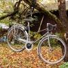 In_Sweden_bikes_grow_on_trees