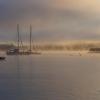 Misty dawn In Paihia