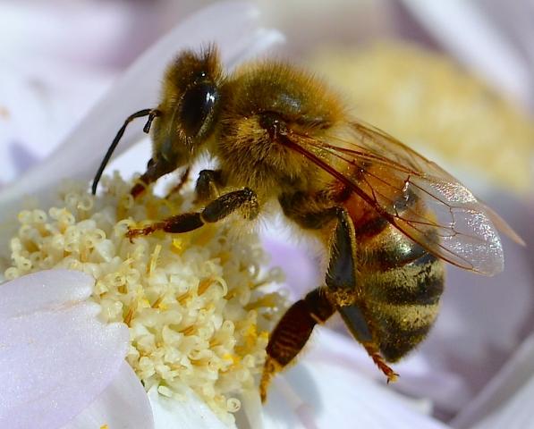 my best bee