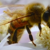 A close view of bee