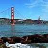 Golden Gate Bridge In All it's Glory