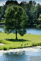 tree geese 001