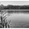 Varia pond (Editing exercise Nov. 27 2016)