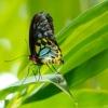 78 Schmetterling.jpg