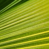 One green leaf structure background