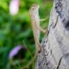 90 gecko.jpg