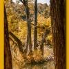 Peek thru the Trees