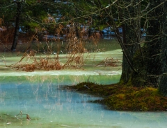 Blue and Green Ice Swamp #4 (D1H)