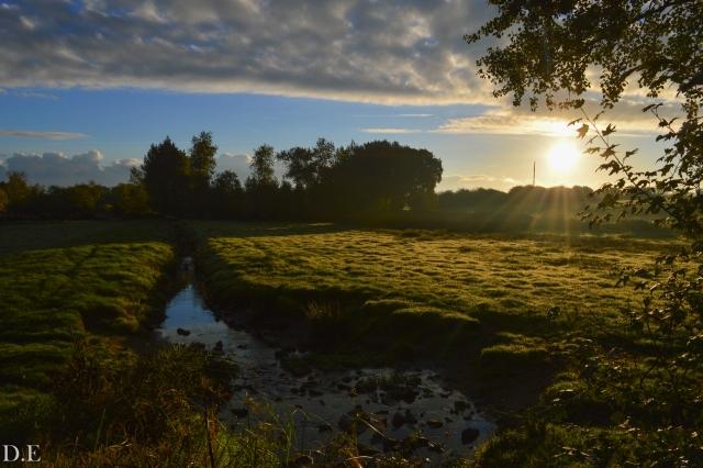 Grouville marsh.