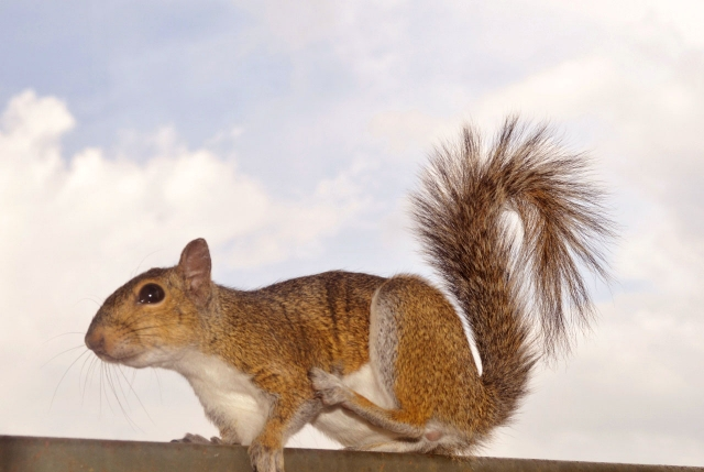 Just Squirreling around