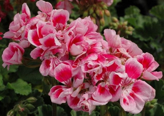 DSC 0149 A decent floral arrangement