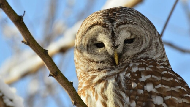 Whooo are you?