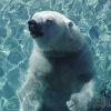 Happy Polar Bear