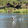Running on water