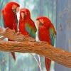 3 Parrots