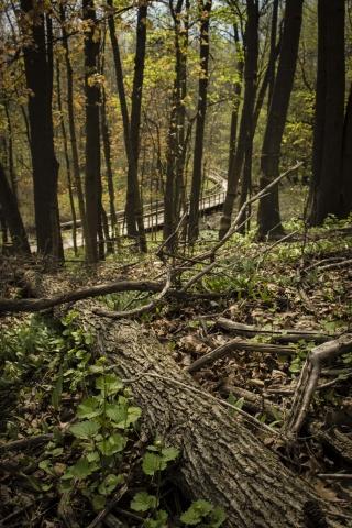 Jack darling forest