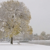 Winter scene tree0024