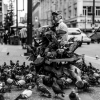 The bird man of Granville Street
