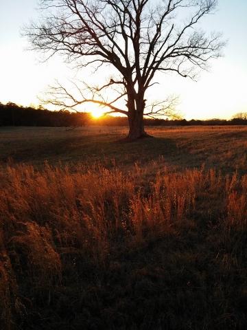 Solo Oak sunset