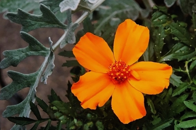 Awesome Orange Flower.