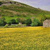 Barns, buttercups and Blue Skies