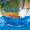 Orange Fishy, Blue Rocks