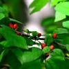 Berries Sep 6, 2014