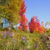 Trees & Flowers October in the Adirondacks