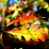"""""""Changing Of The Leaves"""""""
