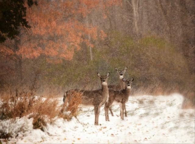 DSC _4946Winter in the Wilderness