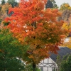Fall Day in Woodbridge Ontario