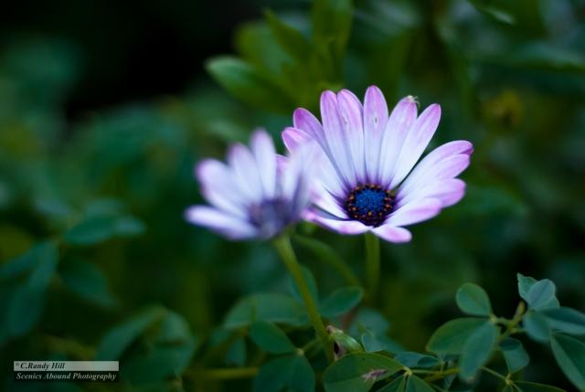"""Along the Garden"" ©C.R.Hill"