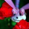 Weird Creature in Wife's Geraniums !