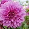 Al's Garden 049