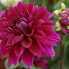 Al's Garden 051