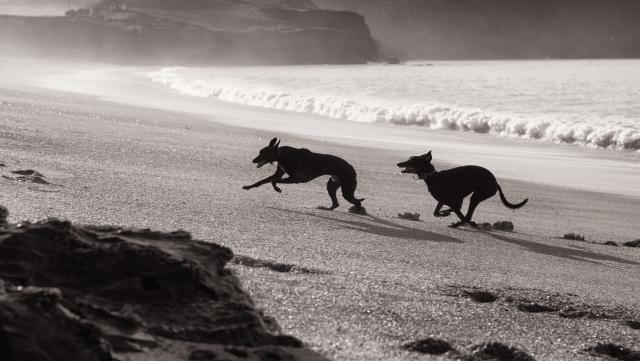 Impy & Ghost on the beach