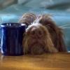 Want Coffee?